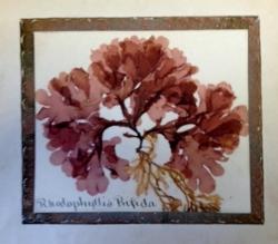 seaweedcover